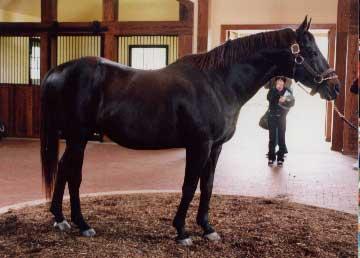 ケンタッキーの種牡馬~3 シアトルスルー: SPOTCHING